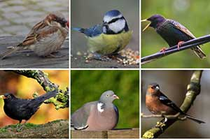 Big Garden Birdwatch Birds