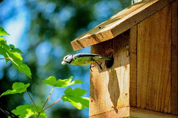 siting a sparrow nest box 1