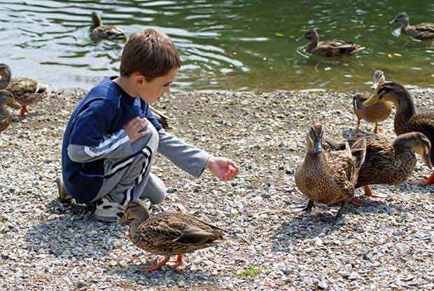 Birds Ducks And Cake Ideas Designs