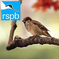 RPSB Big Garden Birdwatch