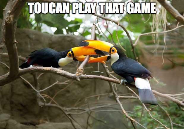 Bird Puns British Bird Lovers