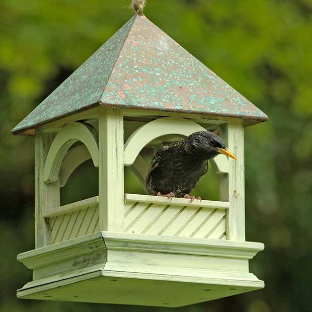 using a bird table 2