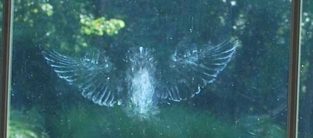 how to stop birds flying into reflective glass