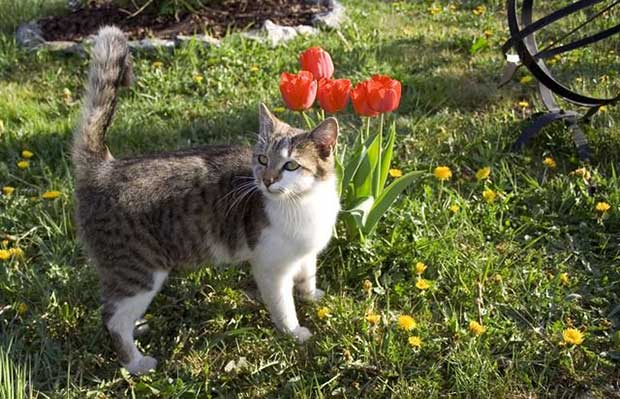 How To Deter Cats And Dogs From Your Garden