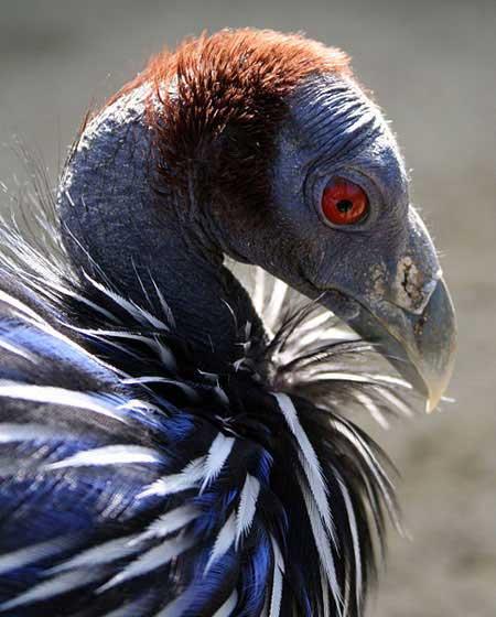 The World's Ugliest Birds - British Bird Lovers