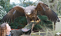The History Of Falconry