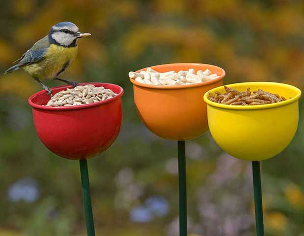 Bird Feeders British Lovers