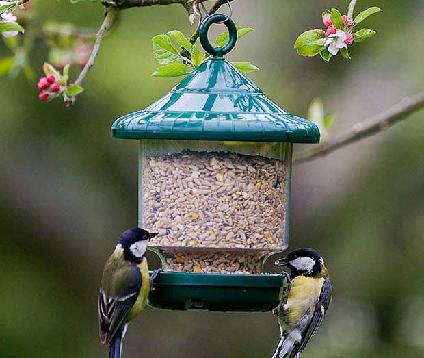 types of bird feeders british bird lovers. Black Bedroom Furniture Sets. Home Design Ideas