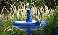 Summer Bird Bath