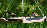 10 Bird Table Tips
