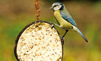 Coconut Bird Food Treat