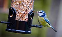 Nature's Feast Bird Food