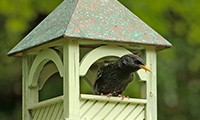 Positioning Your Bird Table