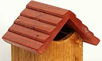 Tom Chambers Nest Box