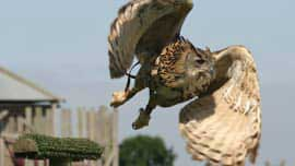 Ultimate Birds Of Prey Day In Dorset