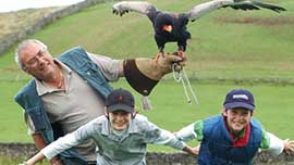 Birds Of Prey Experience In Hampshire