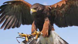 Birds Of Prey Experience In Kent
