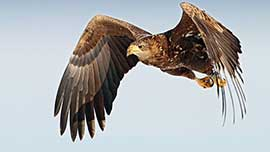 Birds Of Prey Experience In Yorkshire