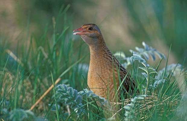 10 Nocturnal Birds - British Bird Lovers
