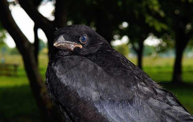 Why Bird Brain Shouldnt Be Considered >> Bird Superstitions British Bird Lovers