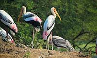 Kumarakom Bird Watching Tour