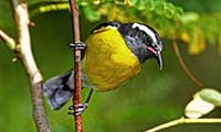 St Maarten Bird-Watching Tour