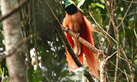 Bird Watching Excursions In Australasia