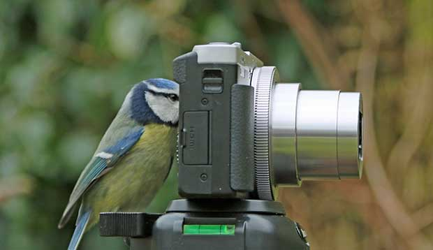 Blue Tit With Camera