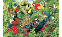 Birds Of Costa Rica Jigsaw Puzzle