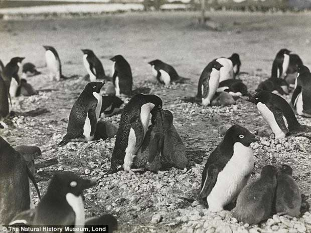 Perverted Penguins
