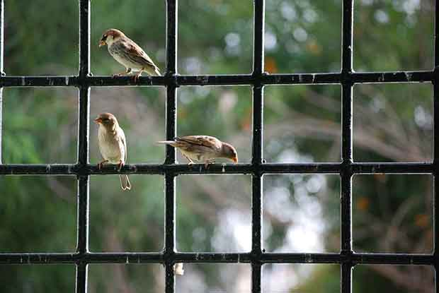 Birds At A Window