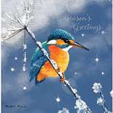 Sparkling Kingfisher Christmas Cards