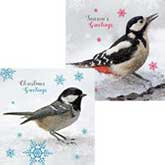 RSPB Tweeting Duo Christmas Cards