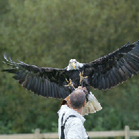 Falconry Day Gift Experience