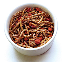 Fruit And Honey Dried Mealworms