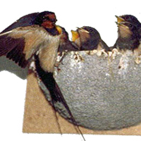 Schwegler Swallow Nest Box