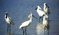 Bird Watching Holidays In Australasia