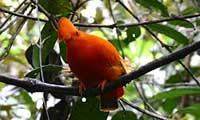 Bird Watching Holiday In Guyana