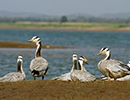 Bharatpur Bird Watching Holiday
