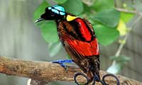 Bird Watching Holiday In Papua New Guinea