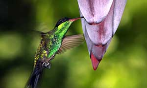 Rockland Bird Sanctuary Tour From Montego Bay