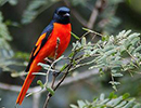 Sri Lanka Birding Holiday