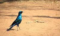 Bird Watching Holiday In Swaziland