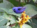 Trinidad And Tobago Bird Watching Holiday